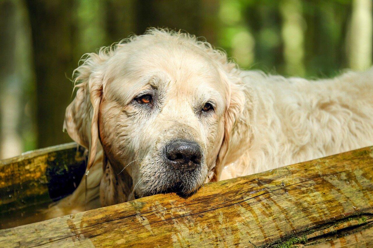 Na co trzeba zaszczepić psa?